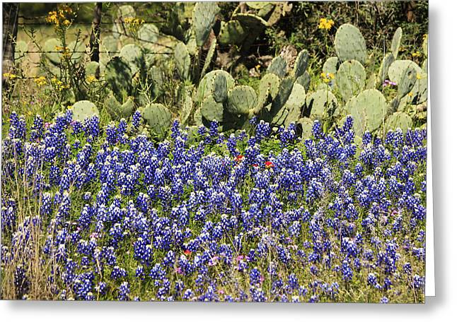 Cactus And Wild Flowers Greeting Card