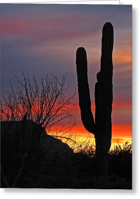 Cactus At Sunset Greeting Card