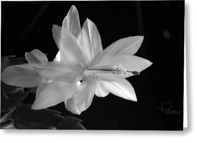 Greeting Card featuring the photograph Cactus Blossom by Ludwig Keck
