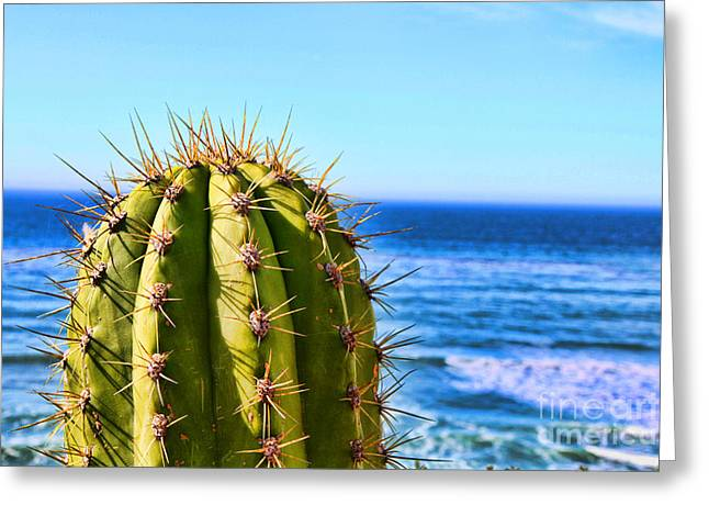 Cactus By The Sea By Diana Sainz Greeting Card by Diana Sainz
