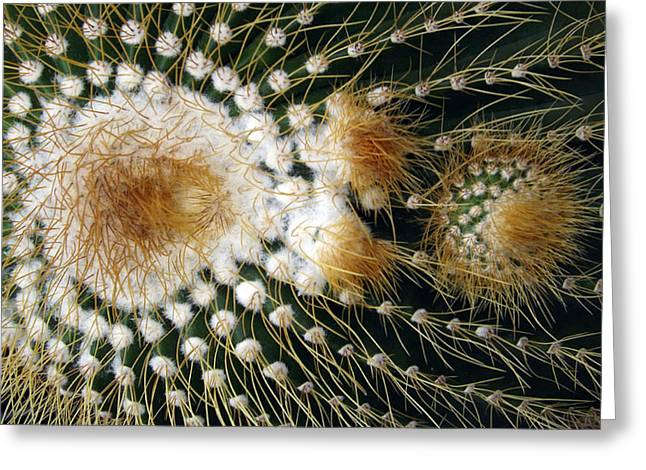 Cactus Close-up Greeting Card by Joyce  Wasser