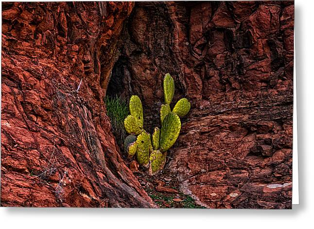 Cactus Dwelling Greeting Card