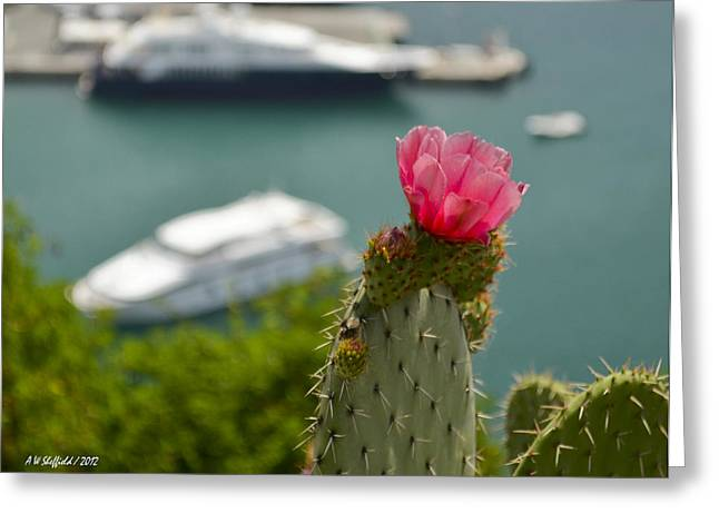 Cactus Flower Above The Port Of Nice Greeting Card by Allen Sheffield