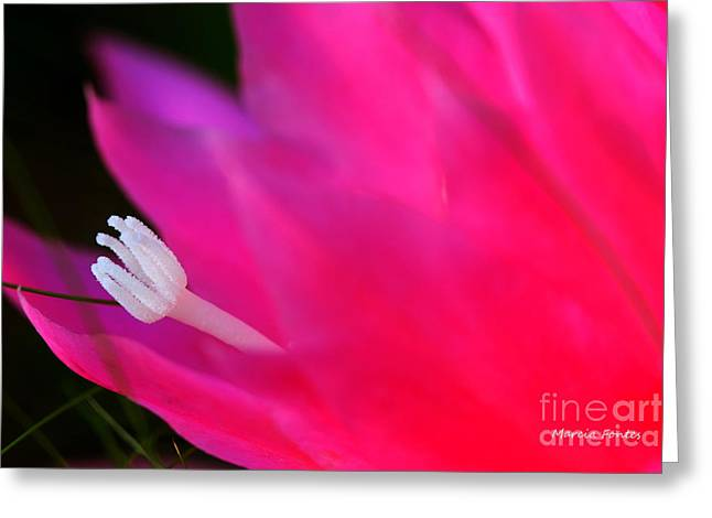 Cactus Flower Summer Bloom Greeting Card by Tap On Photo