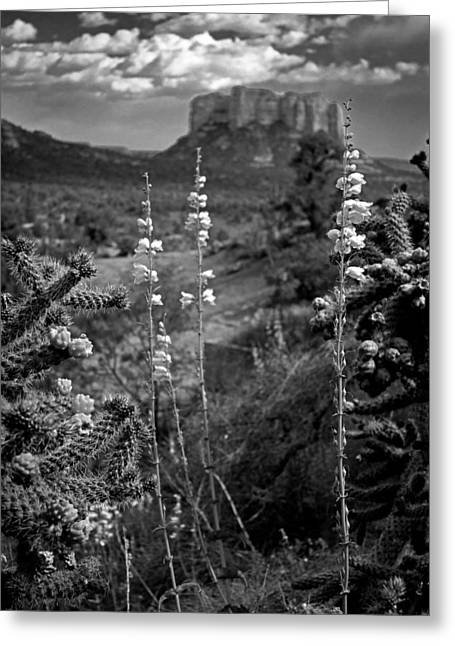Cactus Flowers And Courthouse Bluff Bw Greeting Card by Dave Garner