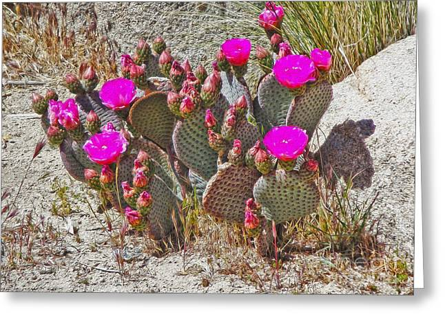 Cactus Flowers Greeting Card by Gregory Dyer