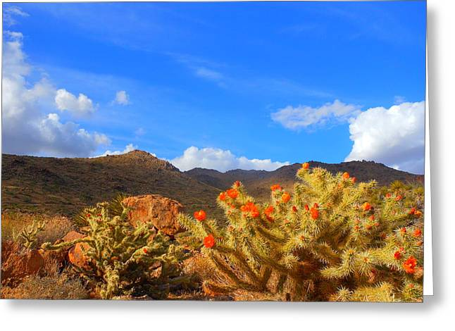 Cactus In Spring Greeting Card