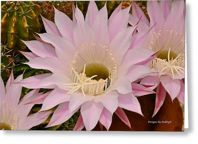 Greeting Card featuring the photograph Cactus In The Backyard by Debby Pueschel