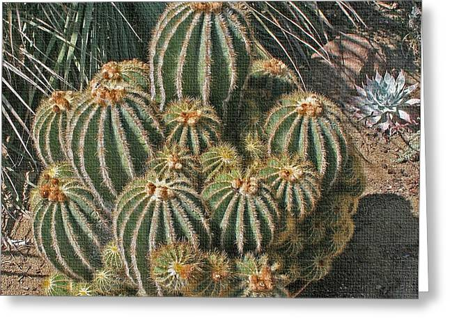 Greeting Card featuring the photograph Cactus In The Garden by Tom Janca