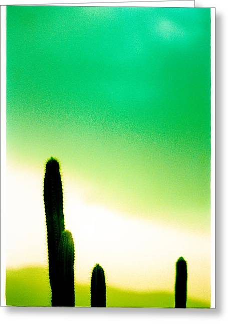 Cactus In The Morning Greeting Card by Yo Pedro