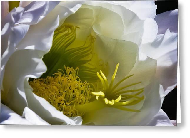 Cactus Interior Greeting Card