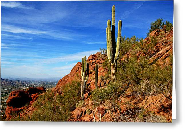 Cactus On Camelback Greeting Card