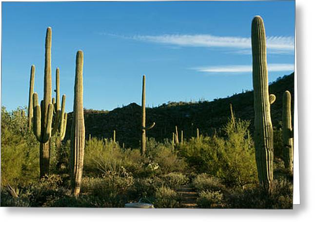 Cactus Greeting Card by Panoramic Images