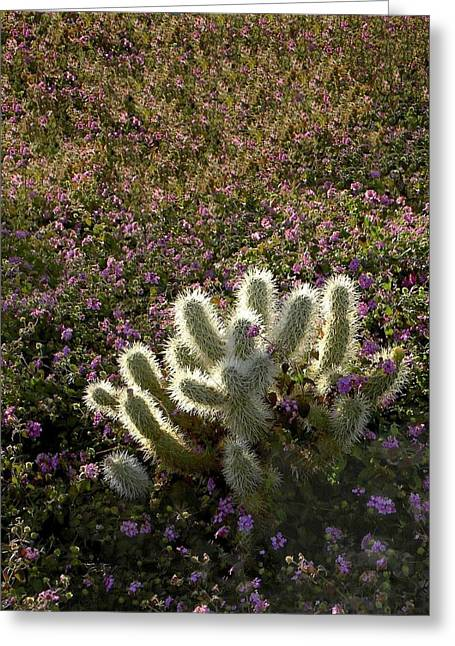 Cactus Surprise Greeting Card