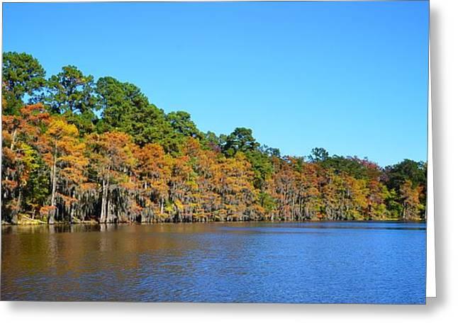Caddo Lake 1 Greeting Card by Ricardo J Ruiz de Porras