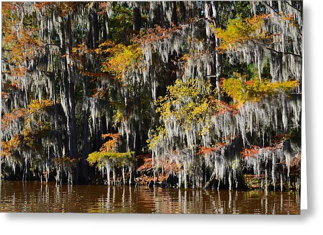 Caddo Lake 4 Greeting Card