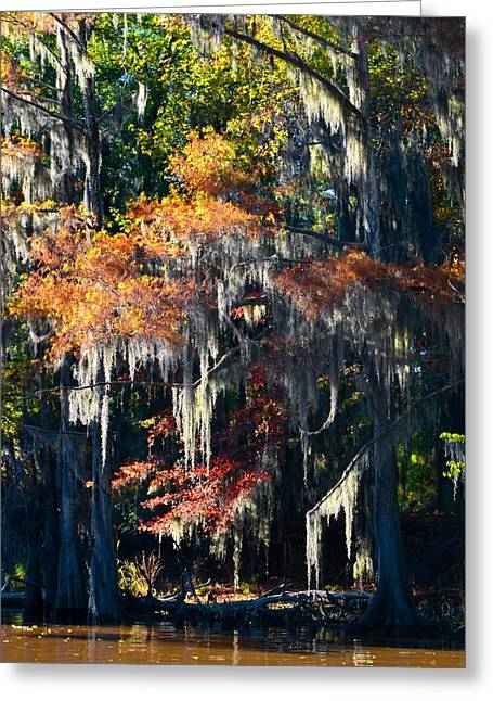 Caddo Lake 40 Greeting Card