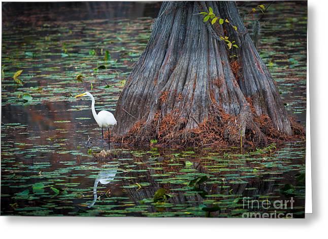 Caddo Lake Egret Greeting Card by Inge Johnsson