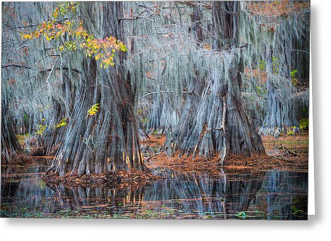 Caddo Lake Fall Greeting Card by Inge Johnsson