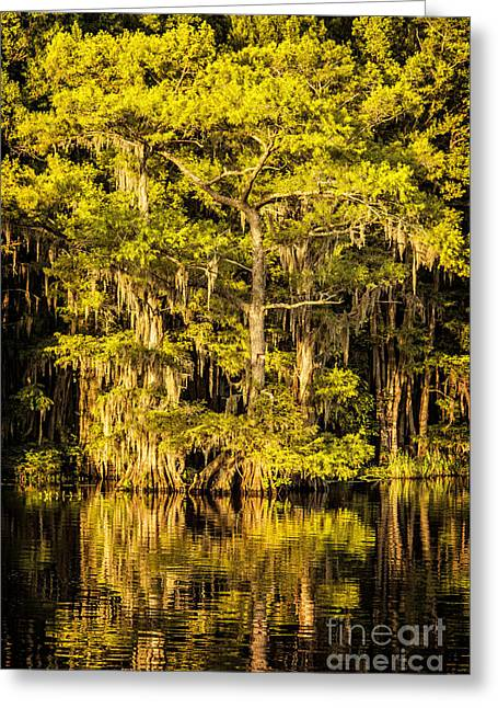 Caddo Lake Shore II Greeting Card by Tamyra Ayles