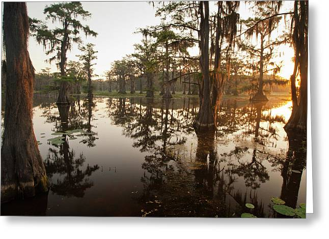 Caddo Lake, Texas At Sunrise Greeting Card by Larry Ditto