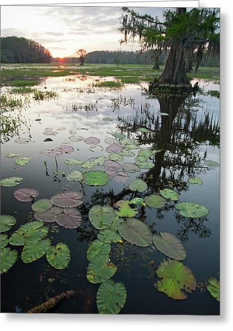 Caddo Lake, Texas's Largest Natural Greeting Card