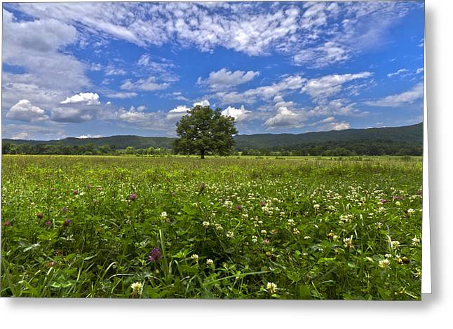 Cades Cove In The Summer Greeting Card