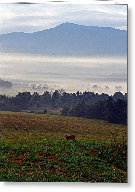 Cades Cove - Misty Morning Greeting Card