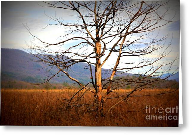 Cades Cove Pasture Greeting Card