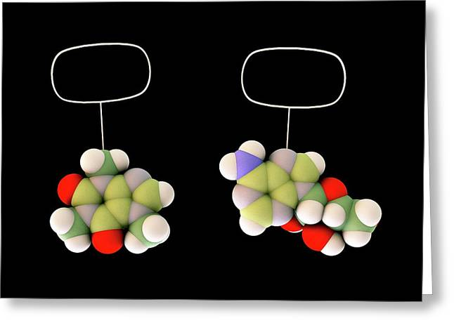 Caffeine And Adenosine Greeting Card by Sci-comm Studios