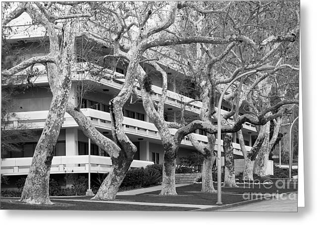Cal Poly Pomona Landscape Greeting Card by University Icons
