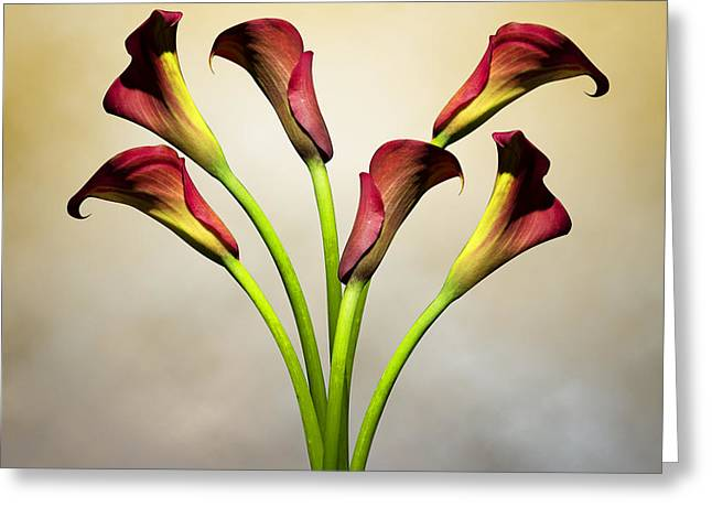Cala Lily 5 Greeting Card by Mark Ashkenazi