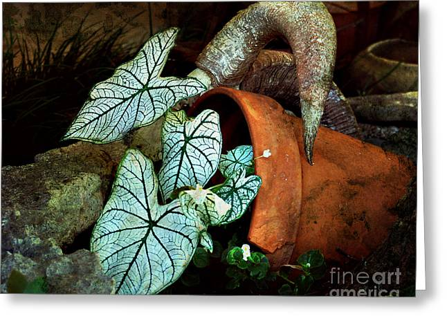 Caladiums In Broken Pot Greeting Card