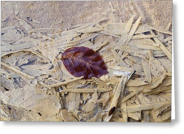 Calcareous Sinter And Leaves Greeting Card by Dr Juerg Alean