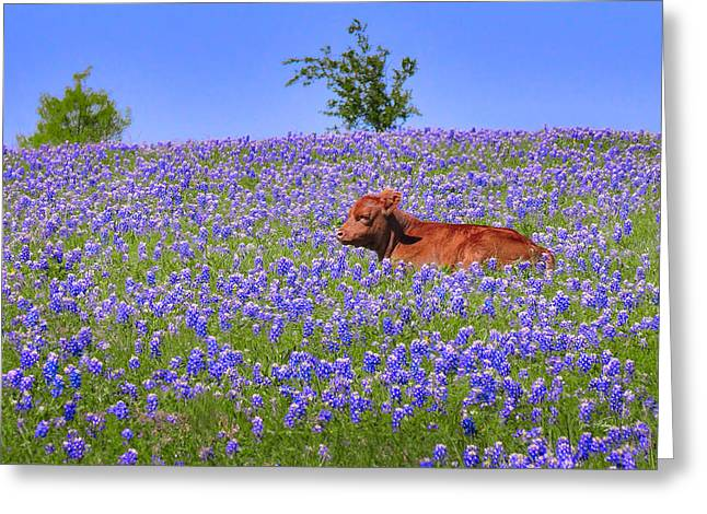 Greeting Card featuring the photograph Calf Nestled In Bluebonnets - Texas Wildflowers Landscape Cow by Jon Holiday