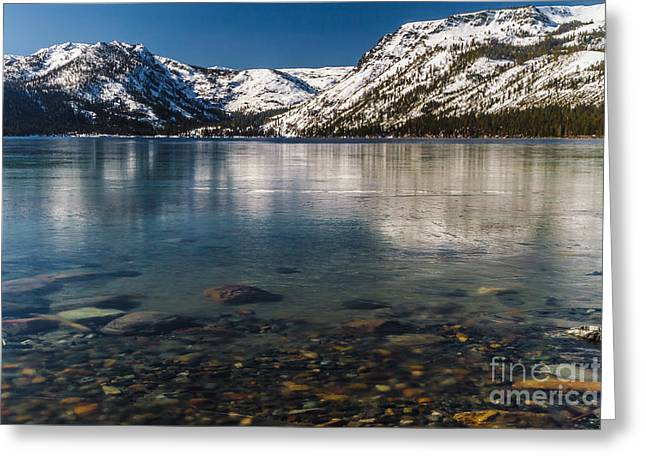 Calico Ice Greeting Card by Mitch Shindelbower