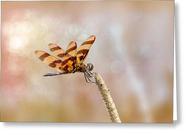 Calico Pennant Greeting Card by Bill Tiepelman