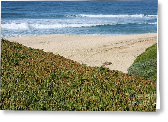 California Beach With Ice Plant Greeting Card