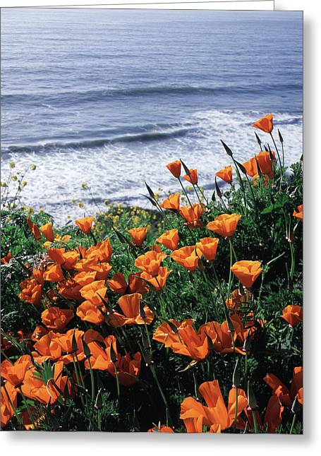 California, Big Sur Coast, California Greeting Card by Christopher Talbot Frank