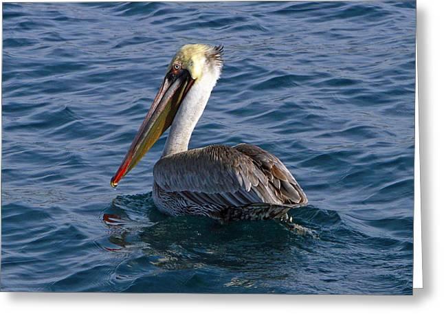 California Brown Pelican Greeting Card by Shoal Hollingsworth