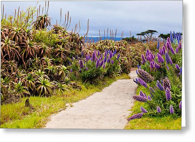 California Coastline Path Greeting Card by Melinda Ledsome