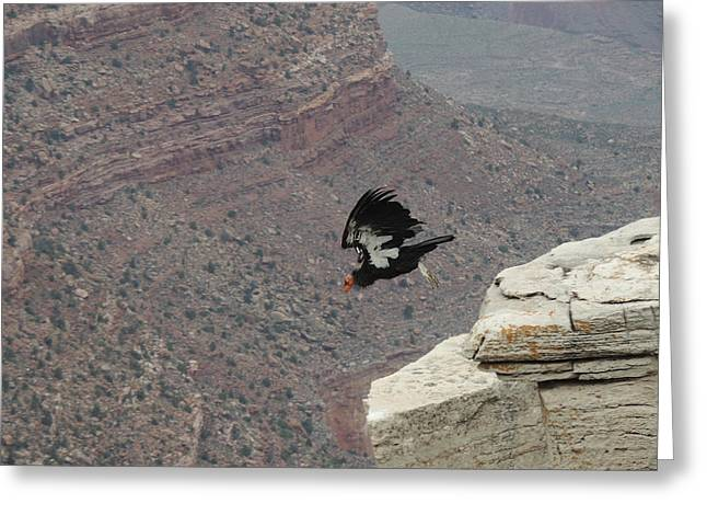 California Condor Taking Flight Greeting Card by Jayne Wilson