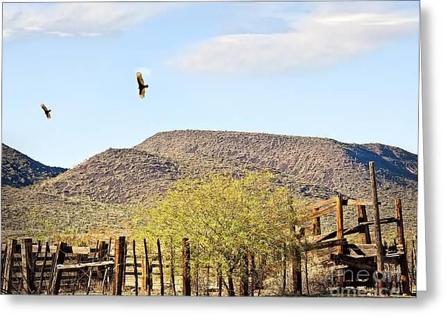 California Condors In Arizona Greeting Card by Lee Craig