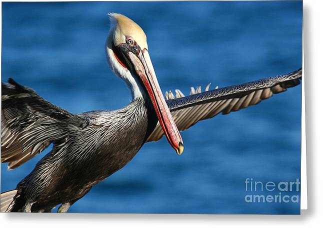 Greeting Card featuring the photograph Freedom In Blue by John F Tsumas