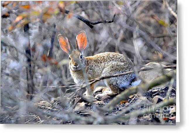 Homeless Hare Greeting Card