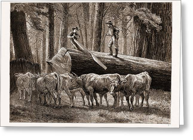 California Logging The Cross-cut Sawyer Greeting Card
