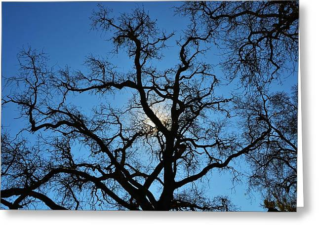 California Oak Sun Tree Greeting Card