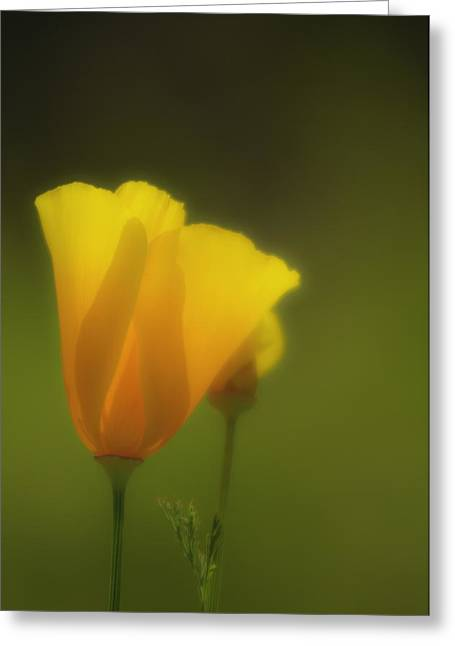 Greeting Card featuring the photograph California Poppies 2 by Sherri Meyer