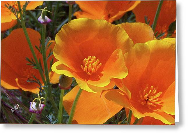 California Poppies Greeting Card by Ben and Raisa Gertsberg