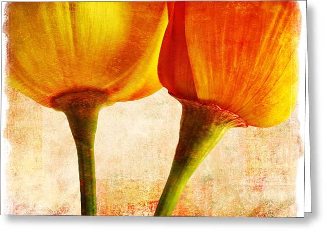 California Poppies Greeting Card by Elena Nosyreva